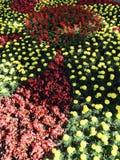 Un cuadrado con las flores rojas y de oro en el corazón de Kyiv - Ucrania - capital Imagen de archivo libre de regalías