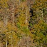 Un cuadrado del bosque sano foto de archivo libre de regalías