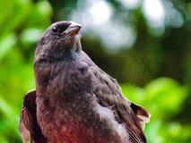 Un cualquier negro del pájaro en jardín Imagen de archivo libre de regalías