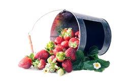 Un cubo de derramarse maduro de las fresas sobre la imagen - una cita del presidente John F imágenes de archivo libres de regalías