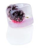 Un cubo de hielo de fusión interior de la fruta de la mora negra Imagen de archivo libre de regalías