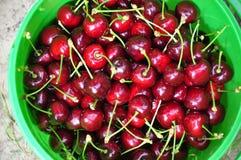 Un cubo por completo de cerezas rojas Foto de archivo