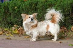 Un cucciolo Immagini Stock Libere da Diritti