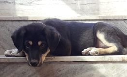 Un cucciolo adorabile che pone alle scale fotografie stock