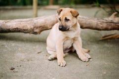 Un cucciolo da solo fotografia stock
