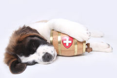Un cucciolo di Bernard del san con il barilotto di salvataggio Fotografia Stock