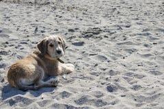 Un cucciolo marrone mette sulla sabbia alla spiaggia fotografia stock libera da diritti