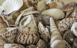 Un cuenco de cáscaras del mar se cierra para arriba Fotos de archivo