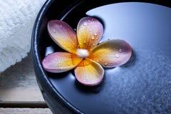Fondo del cuenco del agua de la flor del balneario Imagen de archivo libre de regalías