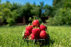 Un cuenco llenado de las fresas rojas frescas Fotografía de archivo