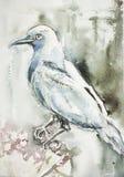 Un cuervo azulado que se sienta en una rama stock de ilustración