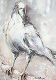 Un cuervo casi monocromático que se sienta en una rama Imágenes de archivo libres de regalías