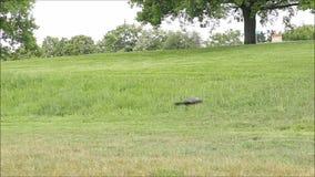 Un cuervo que vuela
