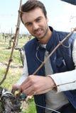 Un cultivateur de raisin photos stock