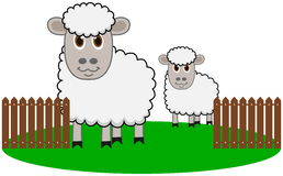 Un cultivo de ovejas orgánico Foto de archivo