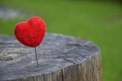 Un cuore su un ceppo di albero. Immagine Stock