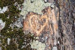 Un cymbol de coeur découpé sur l'arbre Image libre de droits