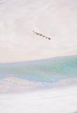 Un détail de la lagune et les dunes de sable dans Qalansia échouent, île de Socotra, Yémen Photo stock