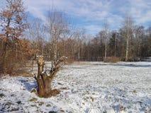 Un día de invierno asoleado Fotos de archivo libres de regalías