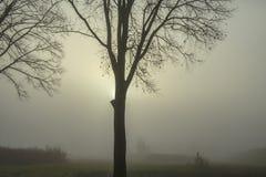 Un día de invierno en la niebla Imagenes de archivo