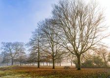Un día de inviernos, parque de Charlecote, Warwickshire Fotografía de archivo libre de regalías