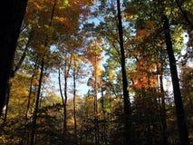 Un día de la caída entre los árboles de nuez dura Imagenes de archivo