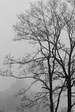 Un día de niebla en Odessa Fotos de archivo