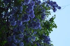 Un día de primavera hermoso a un parque hermoso en Nederland fotos de archivo libres de regalías