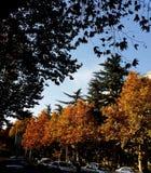 Un día del otoño Foto de archivo libre de regalías