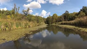 Un día en el pantano