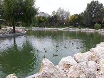Un día en el parque Imagen de archivo