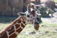 Un día en el parque zoológico Imagen de archivo