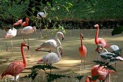 Un día en el parque zoológico Imagenes de archivo