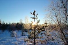 Un día soleado en bosque del invierno Foto de archivo libre de regalías