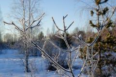 Un día soleado en bosque del invierno Fotos de archivo libres de regalías