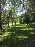Un día soleado en el bosque Foto de archivo