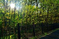 Un día soleado en un parque de Moscú en primavera Imagenes de archivo