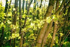 Un día soleado en un parque de Moscú en primavera Foto de archivo libre de regalías