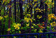 Un día soleado en un parque de Moscú en primavera Imagen de archivo libre de regalías