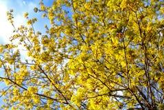 Un día soleado en un parque de Moscú en primavera Fotos de archivo