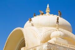 Un dôme de temple avec jouer des singes Images stock