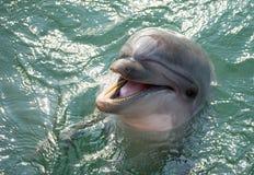 Un dauphin image stock