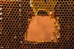 Un descenso de los flujos claros frescos de la miel sobre el panal Miel de la abeja en un marco del color oscuro Minimalismo en c fotografía de archivo