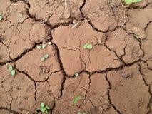 un deserto con poche piante alla stagione estiva Fotografia Stock Libera da Diritti