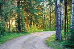 Un dièse tournent sur une route de gravier par une forêt image stock