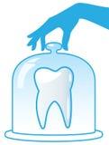Un diente sano es protegido por una bóveda de cristal. Imágenes de archivo libres de regalías