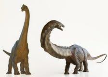 Un dinosaurio del Brachiosaurus al lado de un Apatosaurus Imágenes de archivo libres de regalías