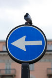 Un direzionale di modo segnale dentro l'Italia Immagine Stock