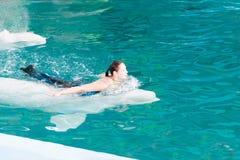 Un discours des entraîneurs avec des dauphins dans un dolphinarium Photo stock