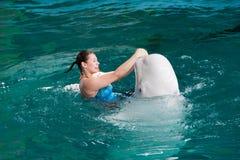 Un discours des entraîneurs avec des dauphins dans un dolphinarium Images stock
